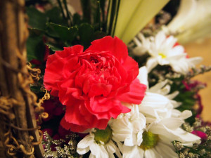Bright carnation